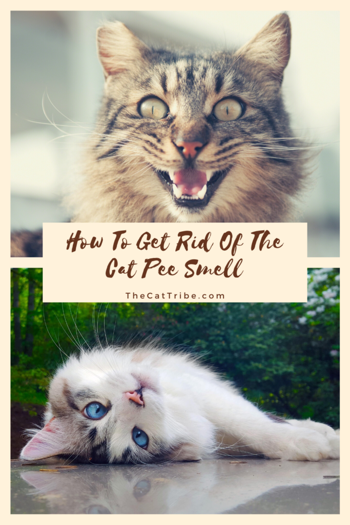 how-to-get-rid-of-the-cat-pee-smell