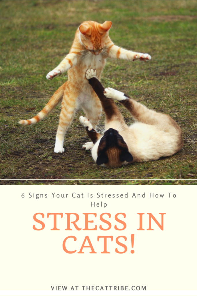 Signs-Your-Cat-Is-Stressed