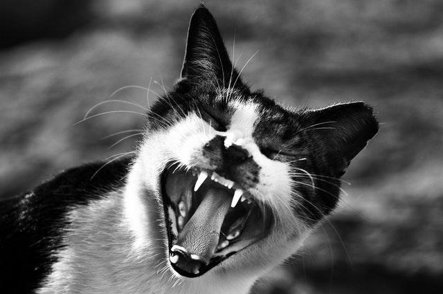 Stress-In-A-Cat