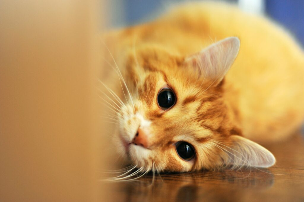 how-to-get-rid-of-cat-pee-smell