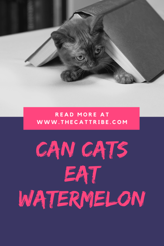 Is-watermelon-bad-for-cats