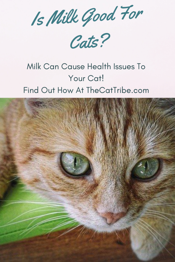 is-milk-good-for-cats
