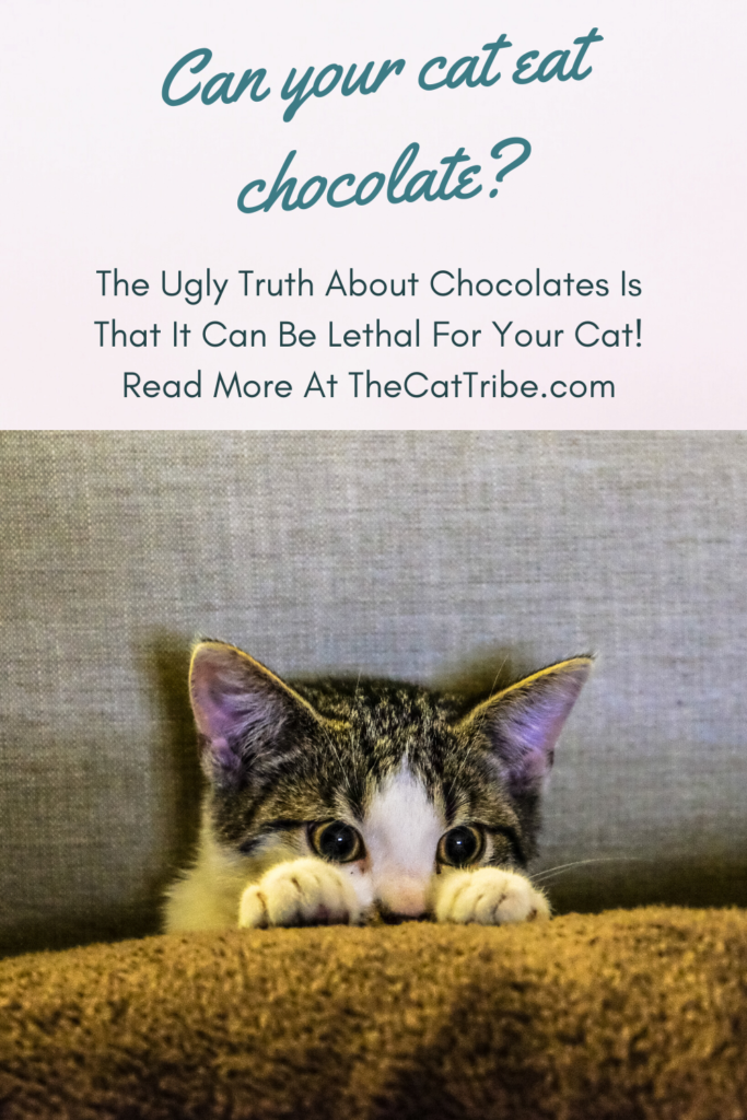 can-cats-eat-chocolate