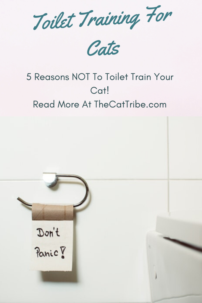 toilet-training-for-cats