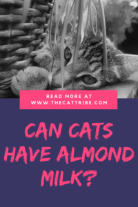 Can Cats Have Almond Milk? Find Out The 3 Best Benefits Of ...