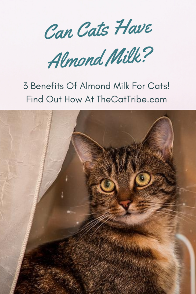 can-cats-have-almond-milk