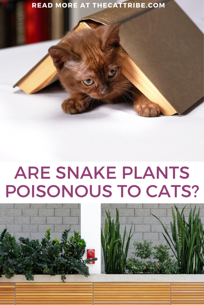 are-snake-plants-poisonous-to-cats