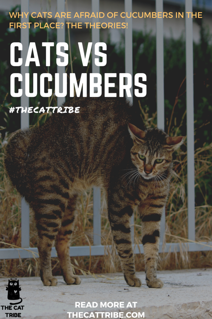 cats-vs-cucumbers