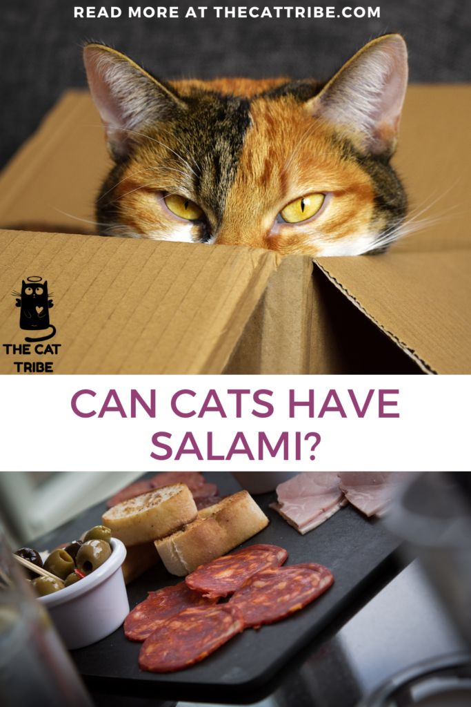 can-cats-have-salami