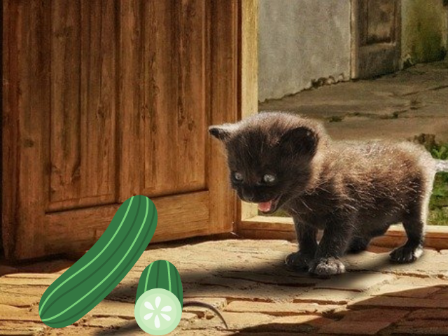 cats-vs.-cucumbers