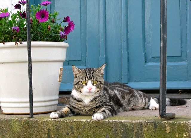 are-succulent-plants-poisonous-to-cats