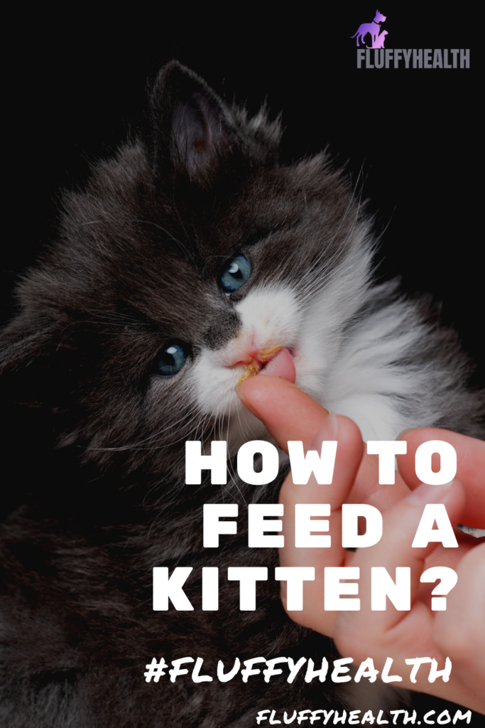 how-to-feed-a-kitten